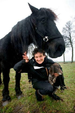 Samen zijn met paarden